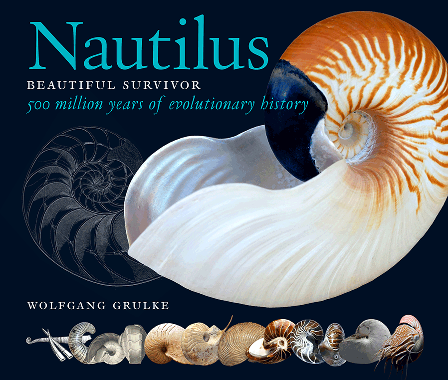Nautilus - Beautiful Survivor by Wolfgang Grulke