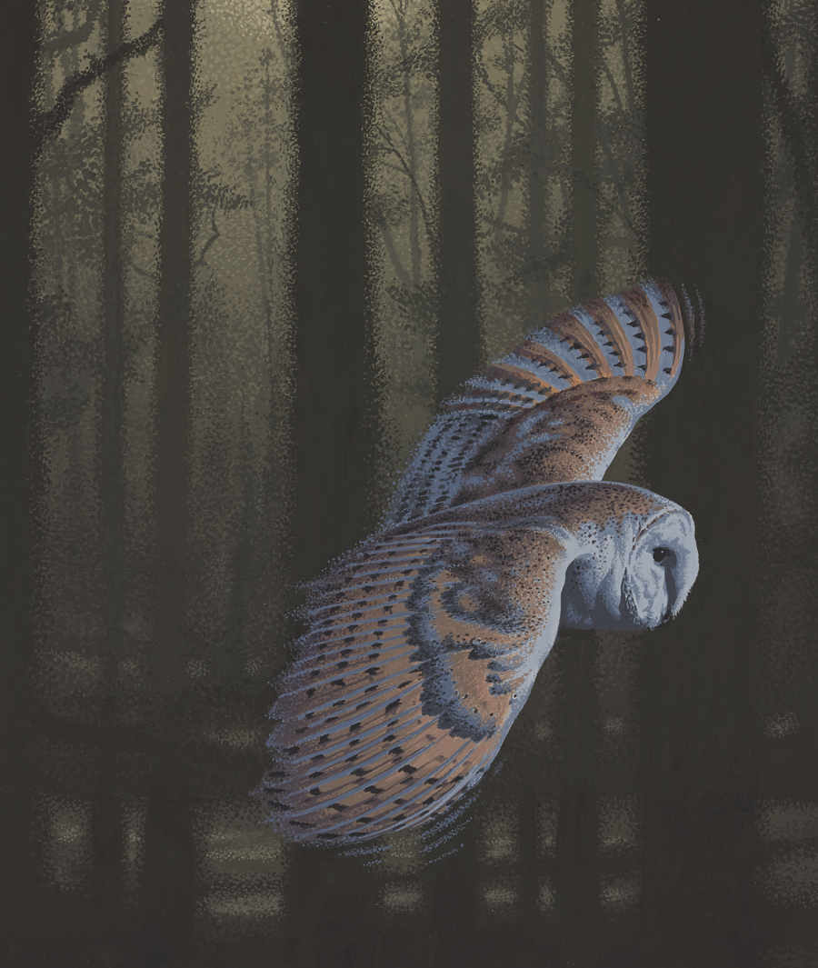 Barn Owl illustration by Neil Gower