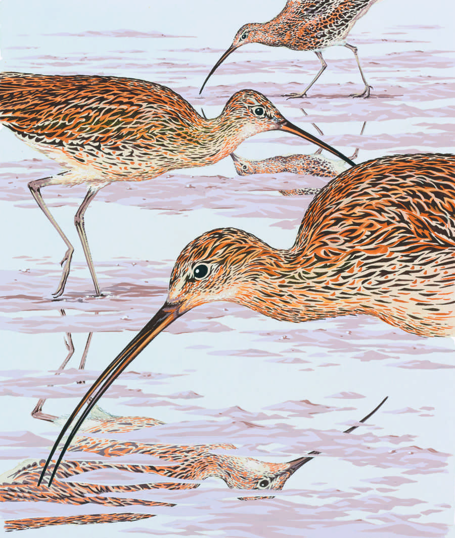 Curlews illustration by Neil Gower