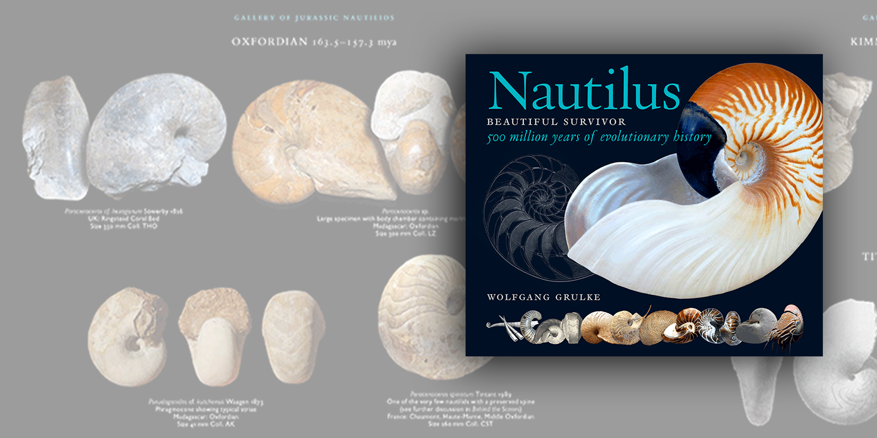 Nautilus – Beautiful Survivor