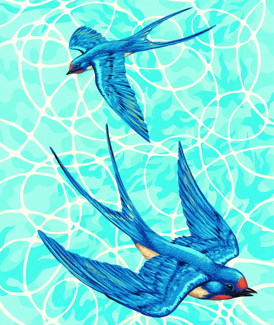 Swallows illustration by Neil Gower