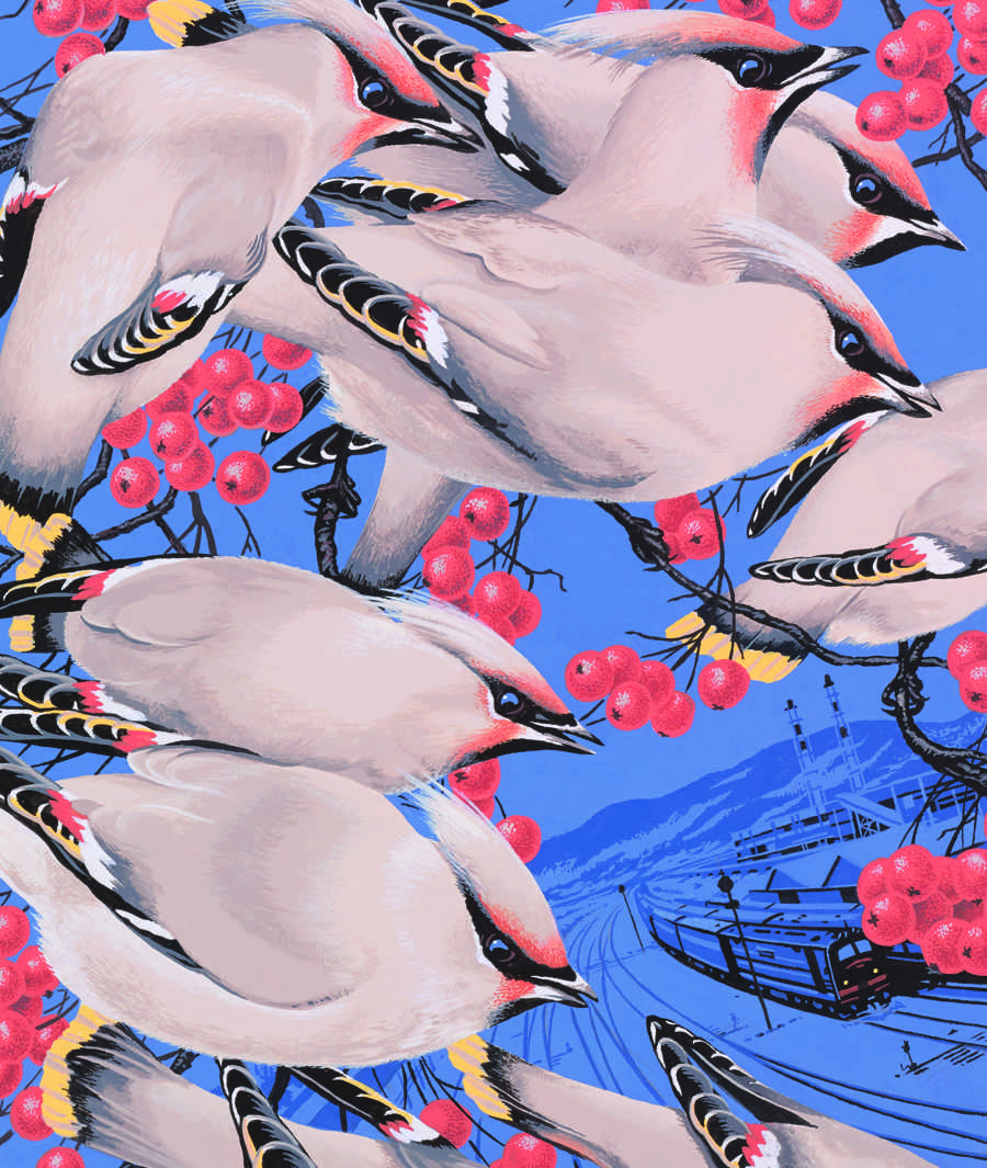 Waxwings illustration by Neil Gower