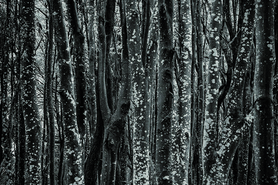 abstract monochrome photo of trees in a forest